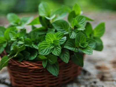 Spearmint leaves whole